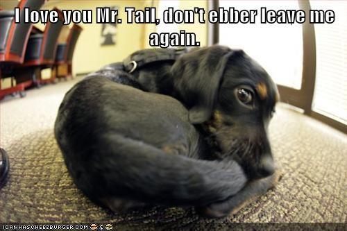 I love you Mr. Tail, don't ebber leave me again.