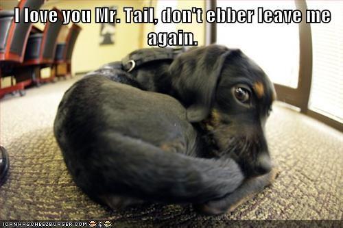 cuddles dachshund dogs love puppy tail - 6522424576