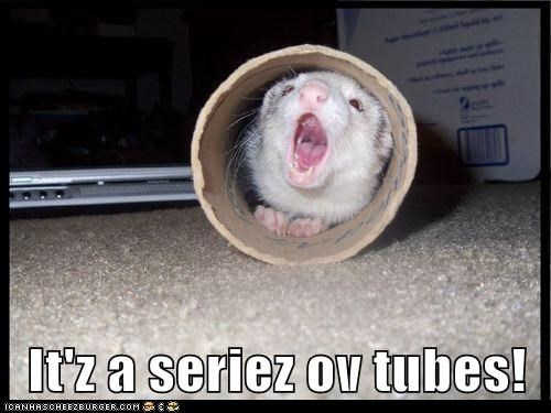 captions ferret internet occupy series of tubes - 6522572288