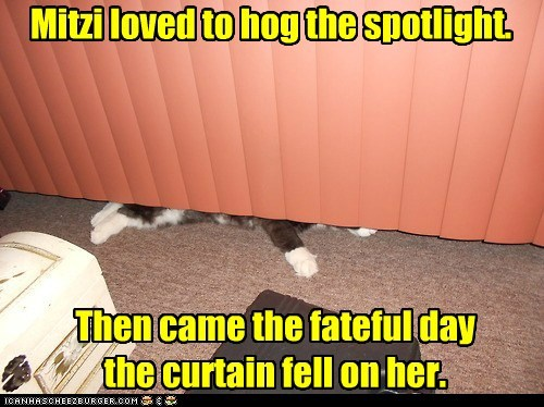 Mitzi loved to hog the spotlight. Then came the fateful day the curtain fell on her.