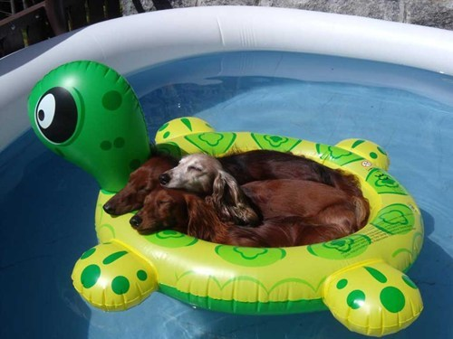 its-sundog - 6523076608