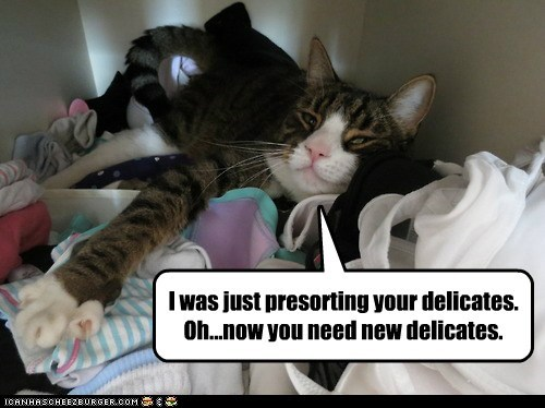I was just presorting your delicates. Oh...now you need new delicates.