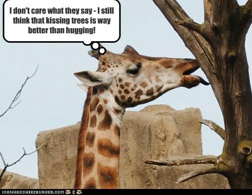 better giraffes hippie hugging kissing love tree hugging trees - 6523455744