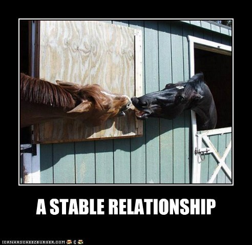 connecting horses kissing love pun relationship stable