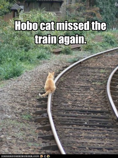 captions,Cats,hobo,homeless,train