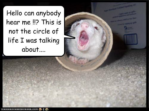 calling circle of life ferret hello misfortune not what i meant tube - 6523581184