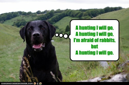 A hunting I will go, A hunting I will go, I'm afraid of rabbits, but A hunting I will go.