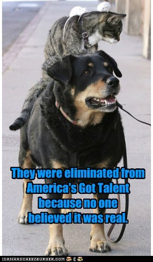americas got talent,cat,dogs,piggy-back ride,rat,talent,what breed