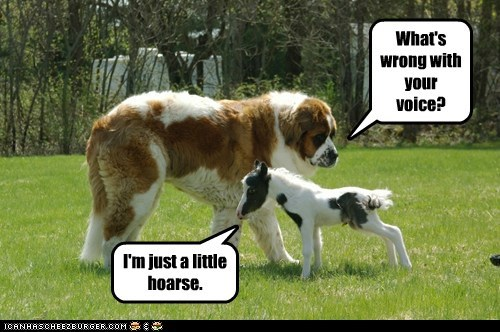 baby,dogs,horse,pony,pun,st bernard