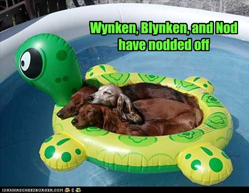 dachshund dogs floaties nodding swimming pool turtle