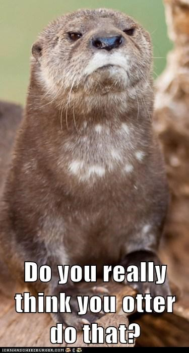 angry disapproval otter pun seal