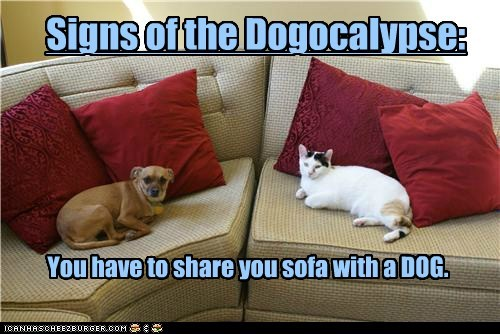 Signs of the Dogocalypse: You have to share you sofa with a DOG.