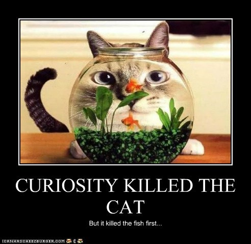 CURIOSITY KILLED THE CAT But it killed the fish first...