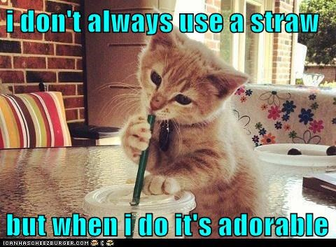 adorable,captions,Cats,drink,i dont always,straw