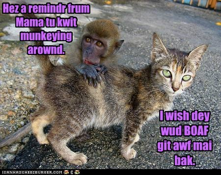 annoyed,back,cat,mom,monkey,monkeying around,quit