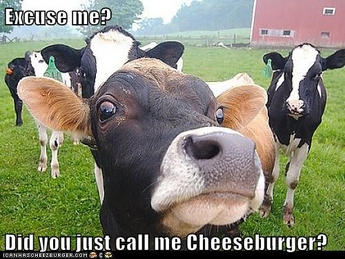 cheeseburger,cows,excuse-me-captions,excuse-me-cheeseburger,insulted,what did you call me