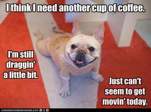 captions,carpet,coffee,dogs,dragging,french bulldogs,mornings,tired