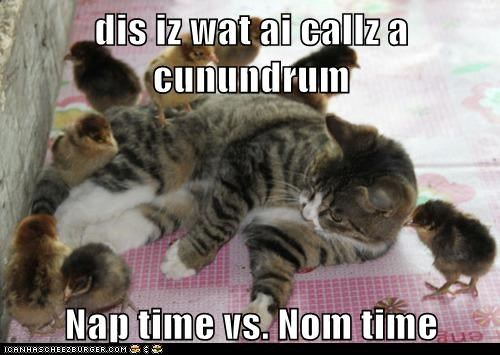 birds,cat,chickens,chicks,conundrum,dilemma,food,hungry,nap time,noms,tired