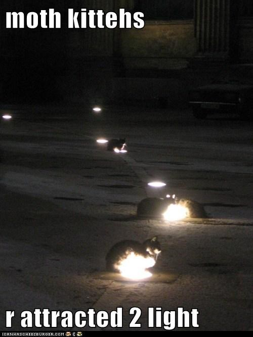 attracted glow captions light Cats moth - 6524646144