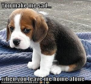 You Make Me Sad When You Leave Me Home Alone I Has A Hotdog