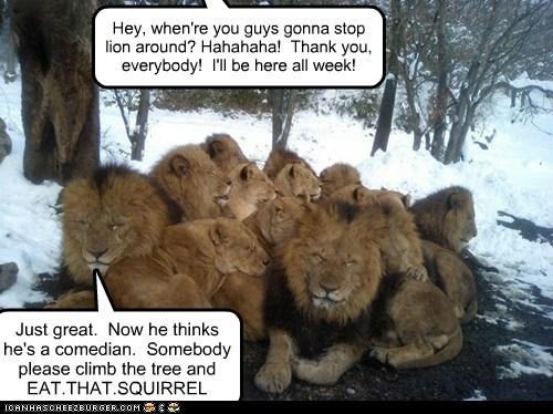 annoyed comedian eat him lion sleeping squirrel - 6524932864