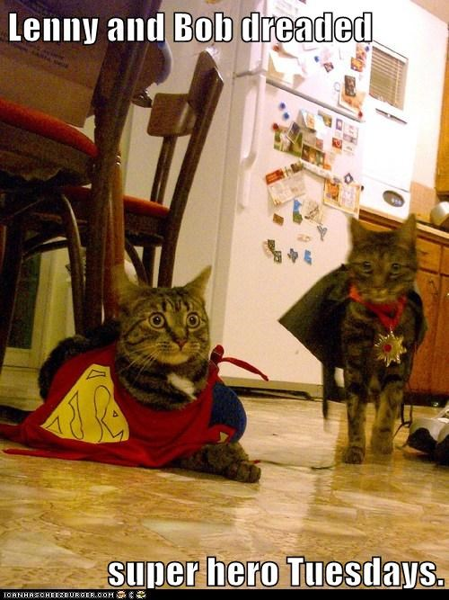 bob,captions,Cats,clothes,costume,dress up,embarassing,lenny,superhero,tuesday