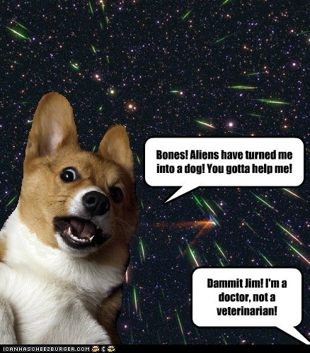 captions,corgi,doctor,dogs,outer space,space,Star Trek,veterinary
