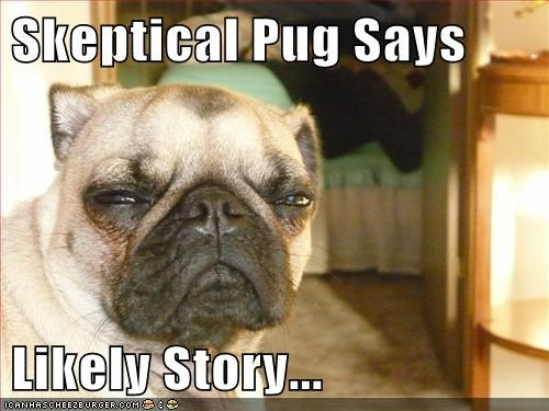 captions,dogs,likely story,pug,skeptical,squinting