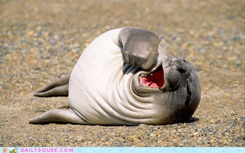 yawning seal beach nap time squee sleepy - 6525432832
