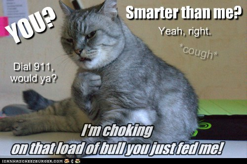 bull captions Cats intelligent rude smart - 6525480448