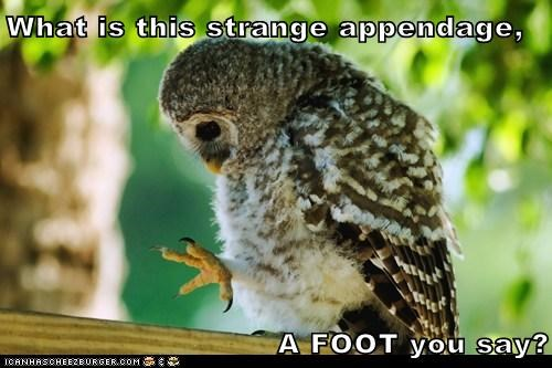 appendage foot Owl perplexed strange what is this