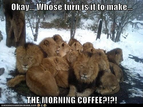 coffee,lions,morning,Okay,tired,turn
