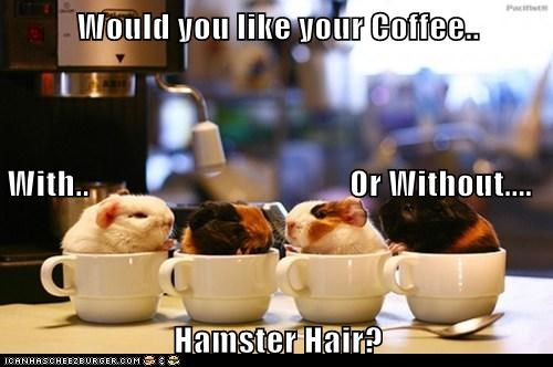 Would you like your Coffee.. With.. Or Without.... Hamster Hair?