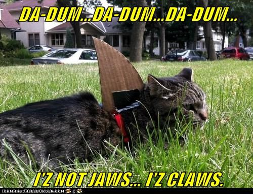 captions,Cats,claws,jaws,lawn,shark