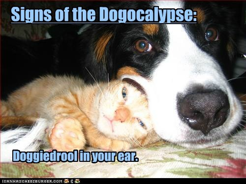 Signs of the Dogocalypse: Doggiedrool in your ear.