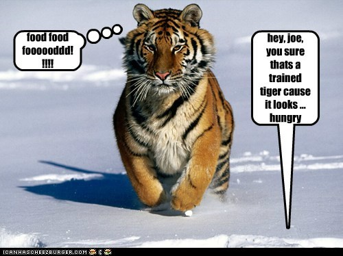 hey, joe, you sure thats a trained tiger cause it looks ... hungry food food foooooddd!!!!!