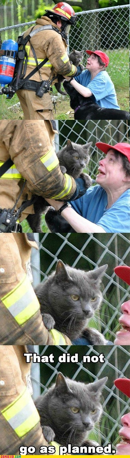 cat next time plan rescue the internets - 6526671360