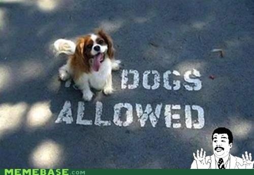Badass dogs - 6526744576