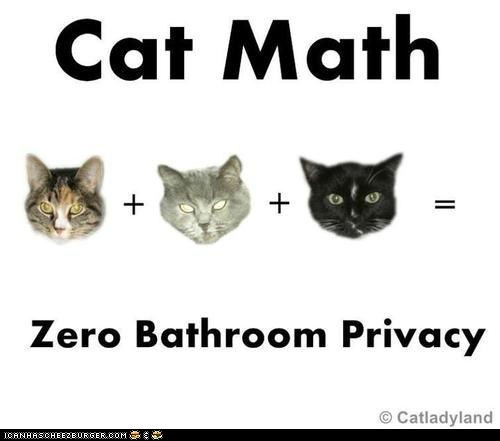 annoying bathrooms Cats leave me alone math privacy