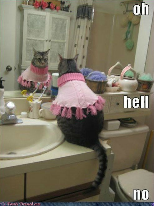 cat,mirror,sweater