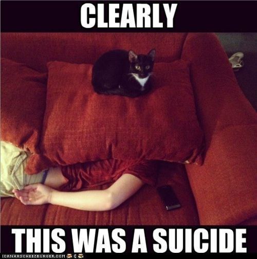 captions Cats couches lies murder pillows suffocation suicide - 6527025920