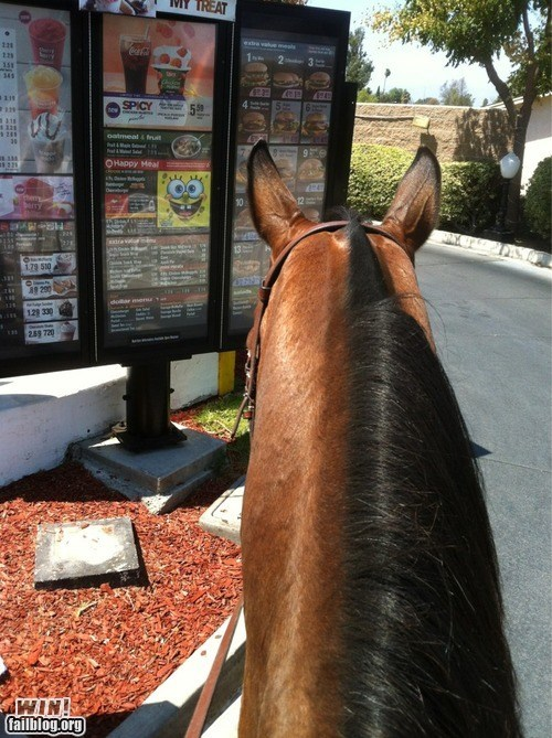 drive thru,fast food,food,horse