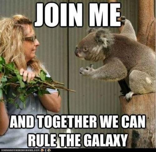 captions evil galaxy join me koala bears koalas plans rule scheming