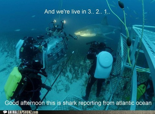 atlantic ocean,camera,filming,news,on location,reporter,shark