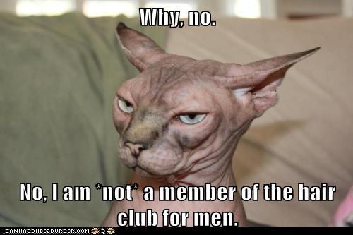 bald balding captions Cats fur hair hair club hair club for men hairless sphinx - 6527326208