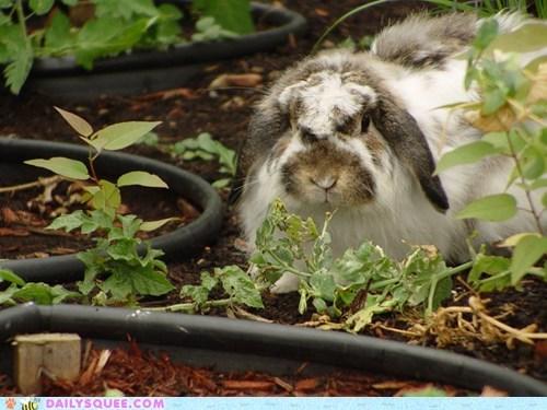 bunny garden pet rabbit reader squee veggies - 6527792384