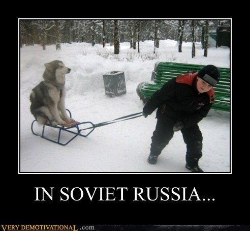 dogs sled Soviet Russia - 6527943168