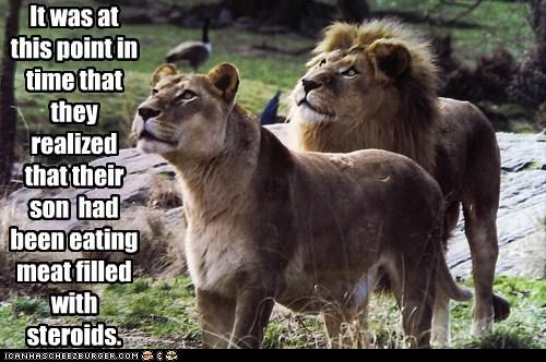 giant lions looking up parents roar son steroids - 6528183296