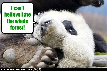 ate fat Forest panda - 6528190464
