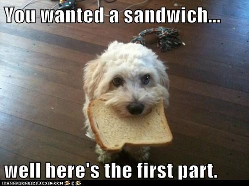 bread,dogs,gift,good dog,sandwhich,what breed